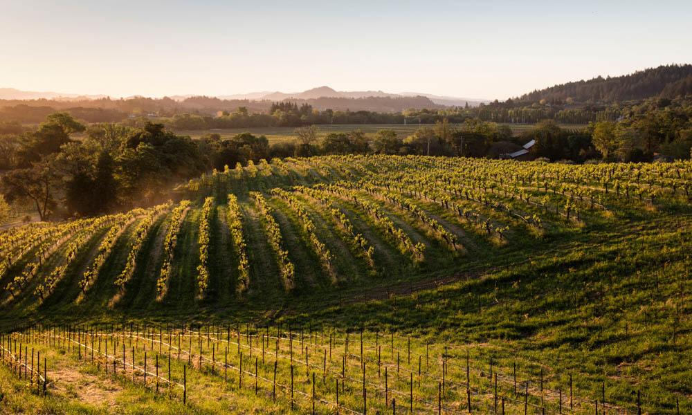 Quivira-wines-1Vineyard