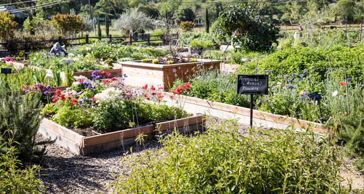 quivira-wines-farming-image-garden