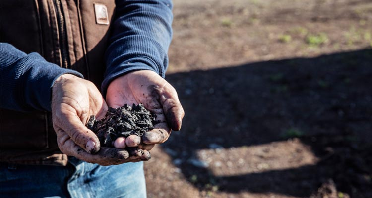 A picture of 2 hands cupping compost