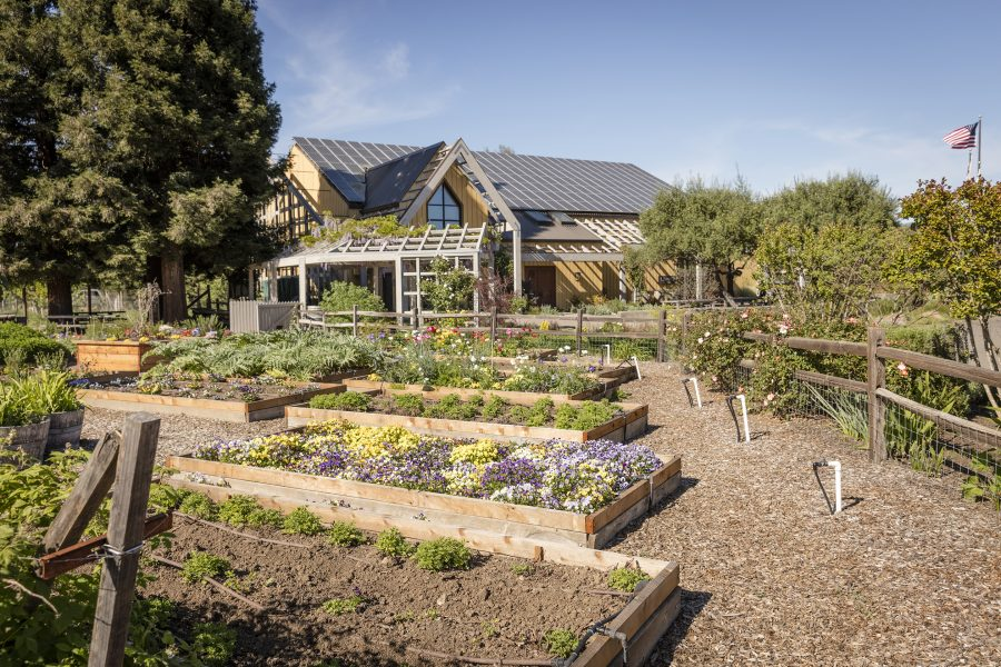 A picture of raised beds in a garden with the tasting room in the background
